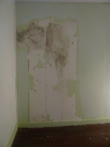 Bedroom beehive plaster.